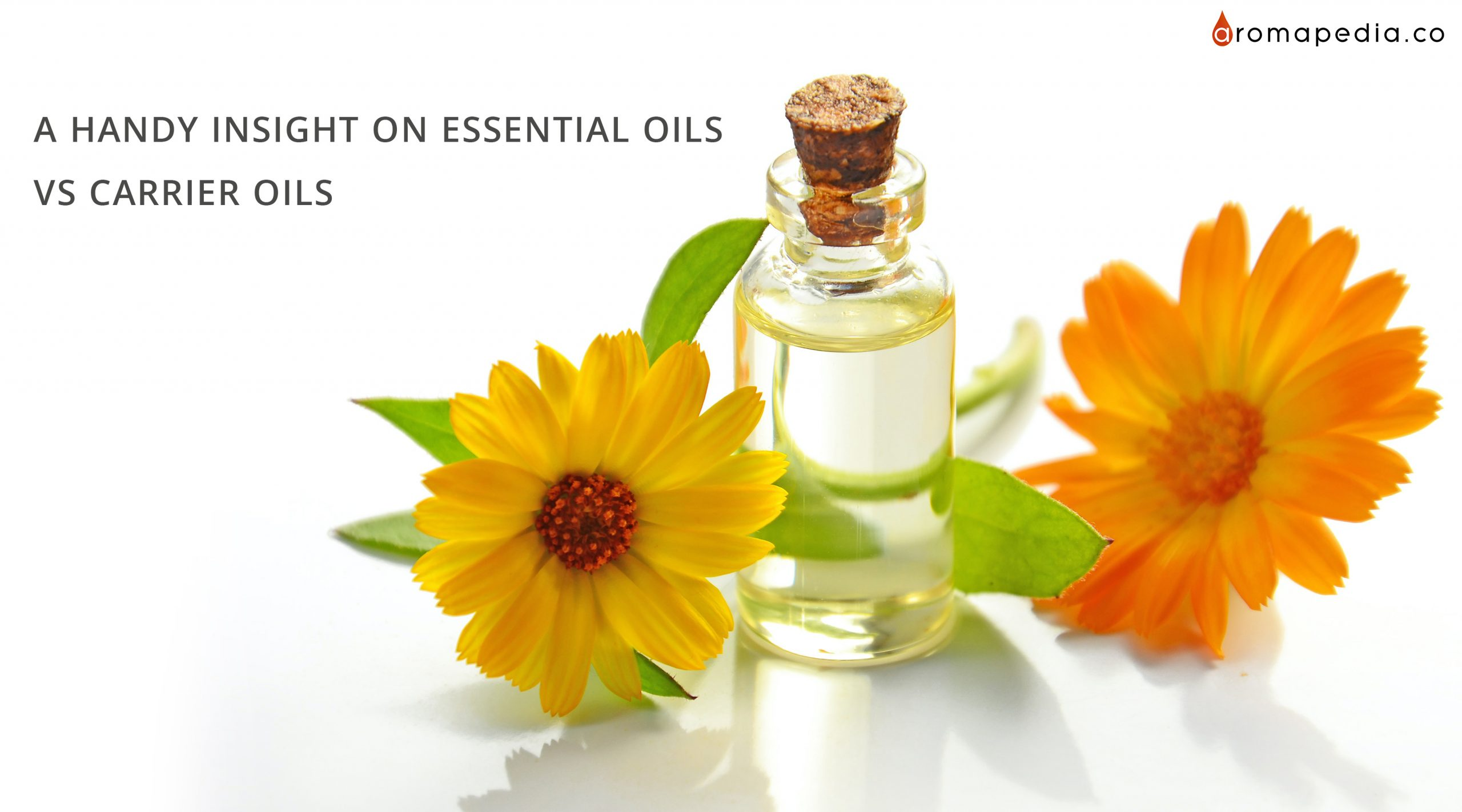 A-Handy-Insight-On-ESSENTIAL-OILS-Vs-CARRIER-OILS
