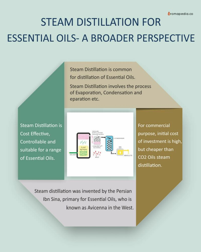 STEAM-DISTILLATION-FOR-ESSENTIAL-OILS-A-BROAD-PERSPECTIVE-info-Graphic-Image-1