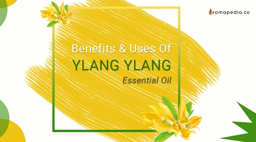 Ylang Ylang Essential Oil Uses and Benefits